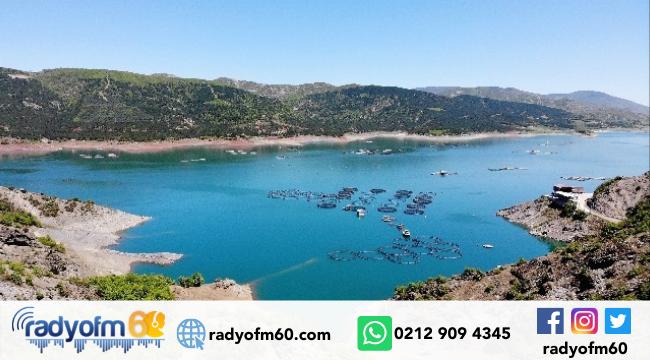 Almus Baraj gölünde her yıl üretilen yaklaşık 5 bin 500 ton somon balığı yurt dışına ihraç ediliyor.